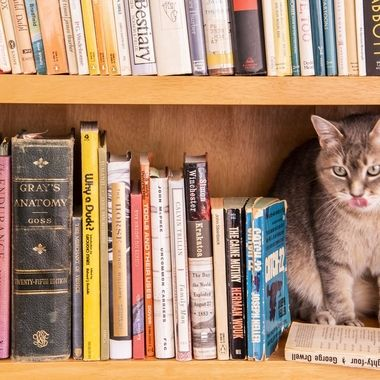My Cat has Good Taste in Books