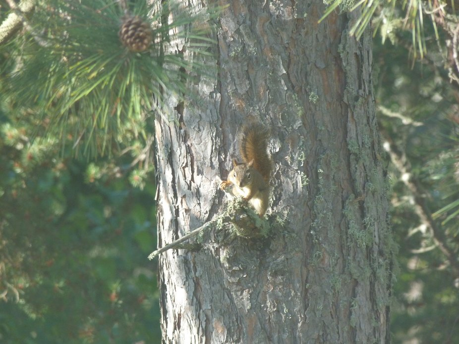Chitters, a squirrel that used to come to my old house. He got his name from everytime he would s...