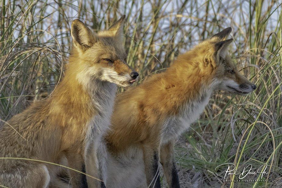 DI Fox Kits_3381