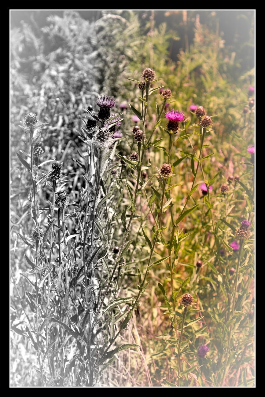I have always been impressed by the beauty of wild flowers Sincerely Theo-Herbots-Photography https://groetenuittienen.blog/