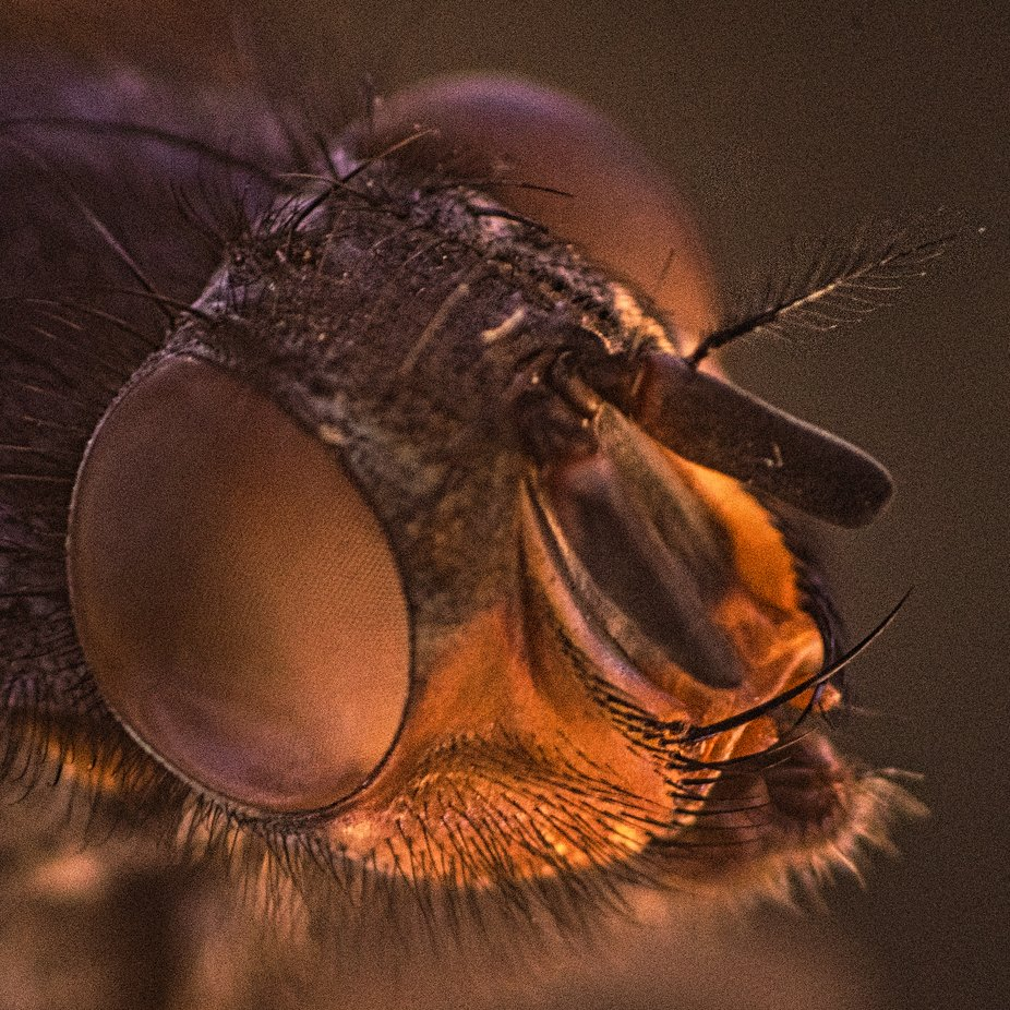 Image of fly taken whilst experimenting with macro.