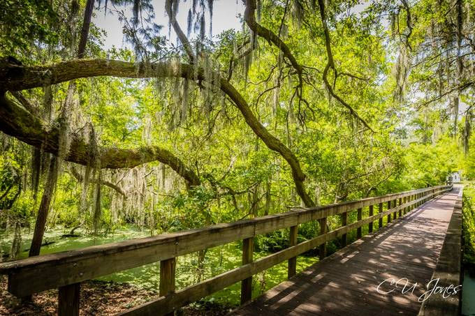 Cypress Wetlands- Wildlife located in the Center of Port Royal, South Carolina