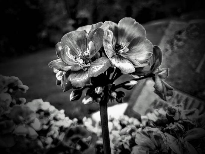 Flower Flower by: Finesse