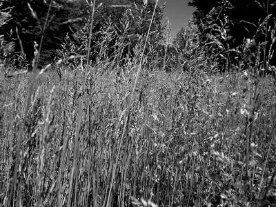 Meadow between two woods