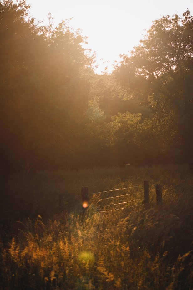 this was such a beautiful evening with the warm glow on the hay field