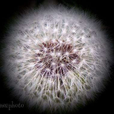 Natures fluff ball