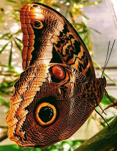 Big Beautiful Butterfly