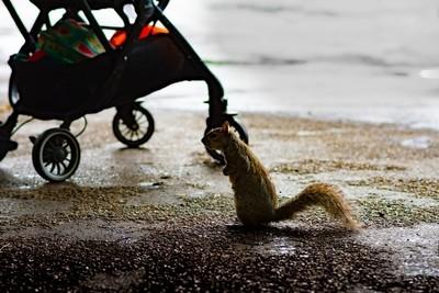 Lost squirrel