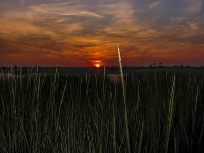 Salt Marsh Sunset 1