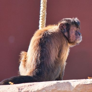 Taken at the new Sydney Zoo on the first day they re-opened after the COVID19 restrcitions were eased.