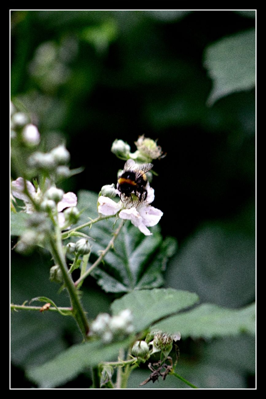 So small, yet so necessary. Without them no pollination of plants Without them, nature dies and so do we Sincerely Theo-Herbots-Photography https://groetenuittienen.blog/