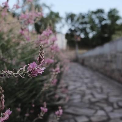 The flowerway