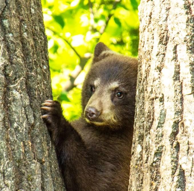 Peeking between the trees!