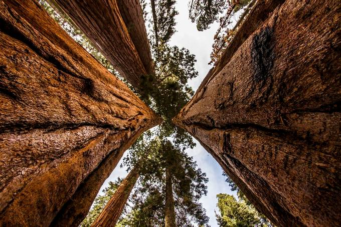 Sequoias by DMartinezPhoto - Creative Captures Photo Contest