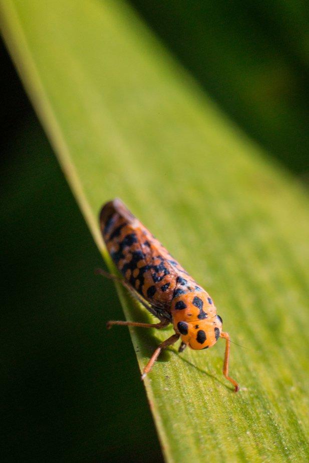 Tunning Bug