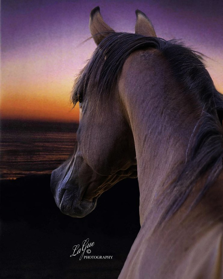 California with outstanding sunset enjoyed by Stallion at his special view at dusk.