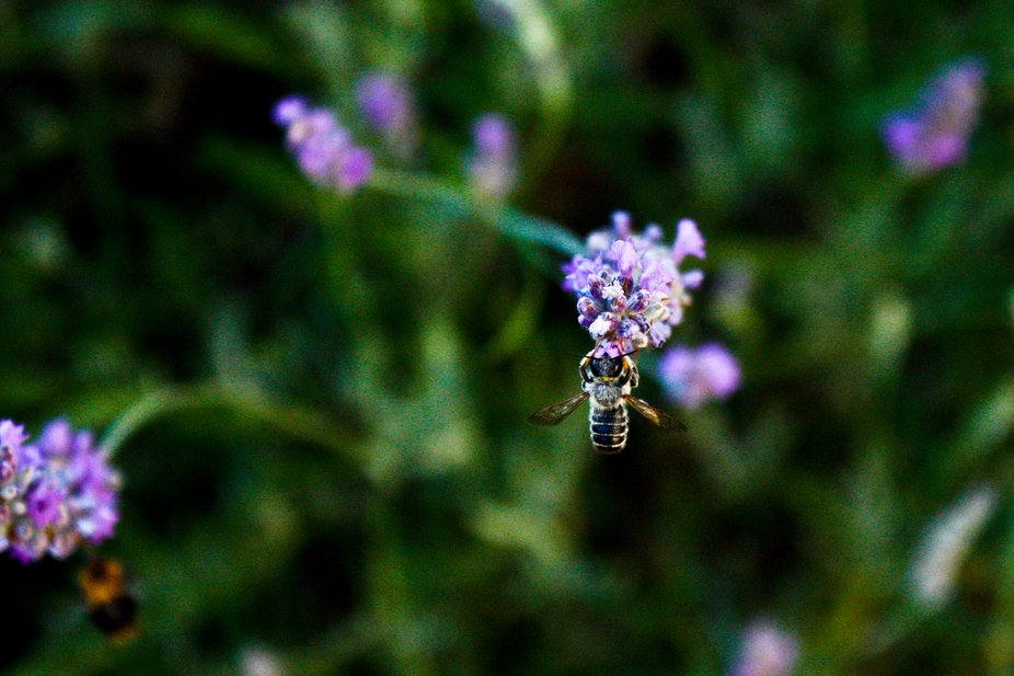 Oh Humble Bumble Bee