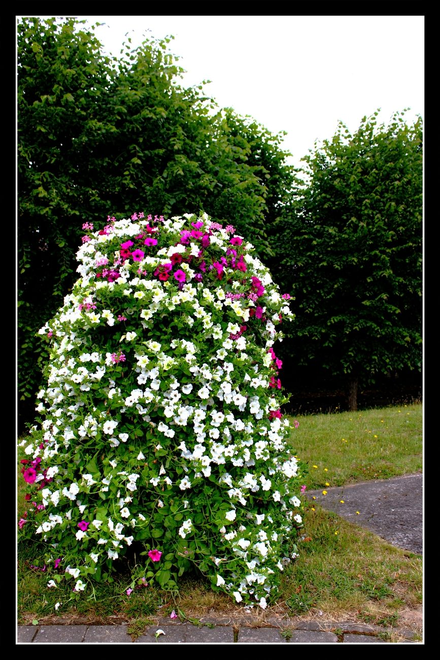 Not only in The Center of Tienen there are beautiful flower boxes everywhere, also on the edge of De Stad and around De Stad Sincerely Theo-Herbots-Photography https://groetenuittienen.blog/