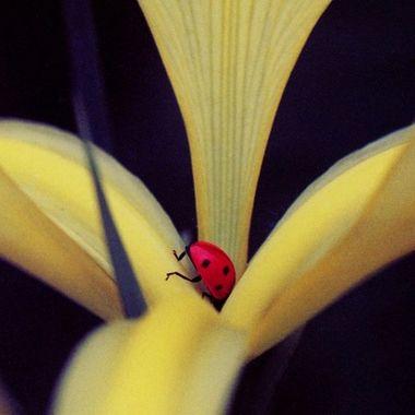 8312 Lady Bug
