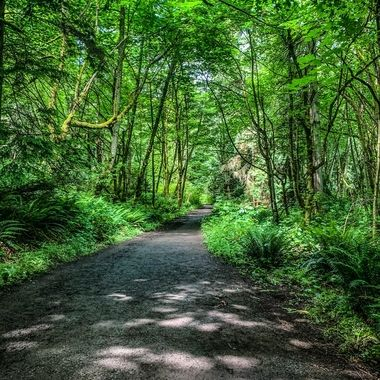 Discovery Park Trails
