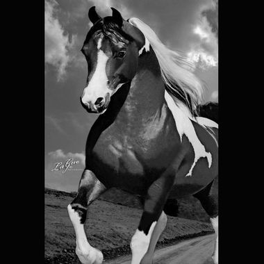 Beautiful Quarter Horse that is black with white main and black tail.