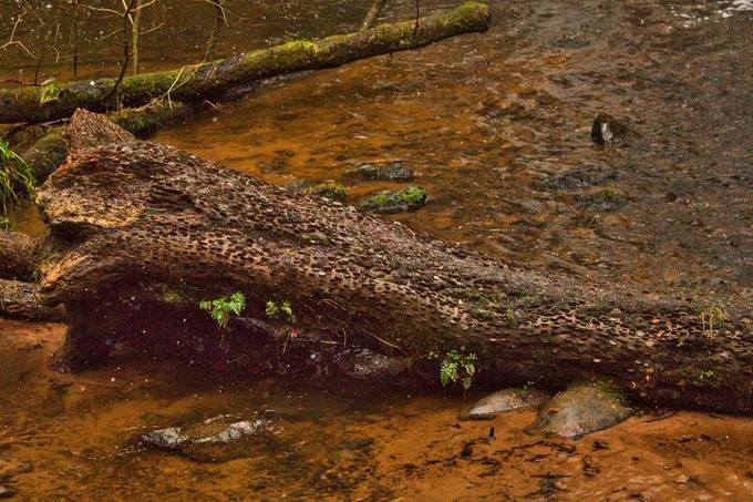 5 of my earliest pictures, I thought I did revisit them and see if I can get some nicer results with Luminar 4, and more experience. Taken in Scotland, on the Black Isle at the Fairyglen walk in Rosmarkies.