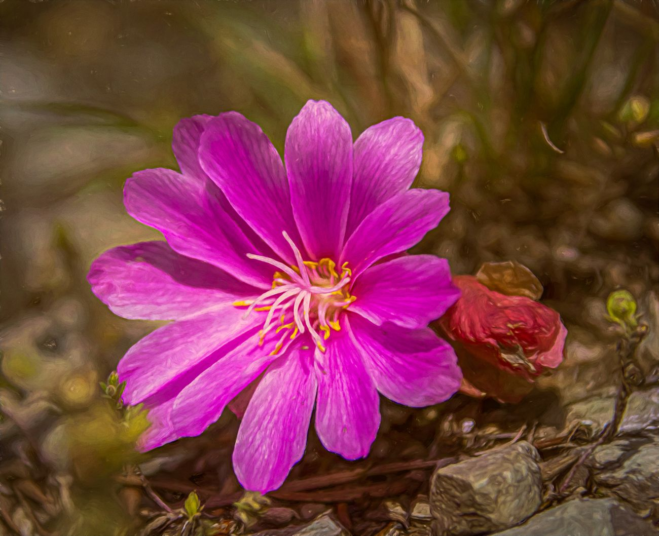 Montana's state flower