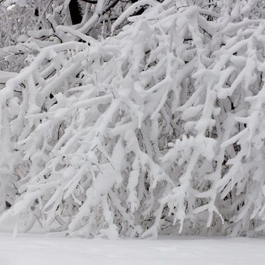 8843 Heavy Snowfall
