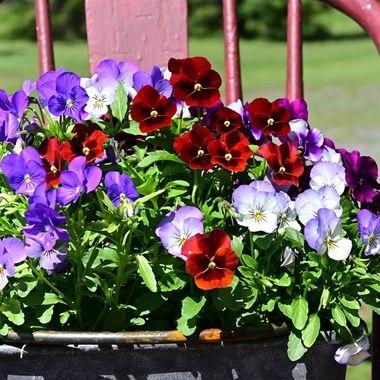 Flower around home