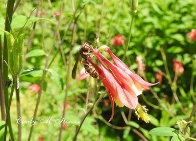 Flower With Wasp