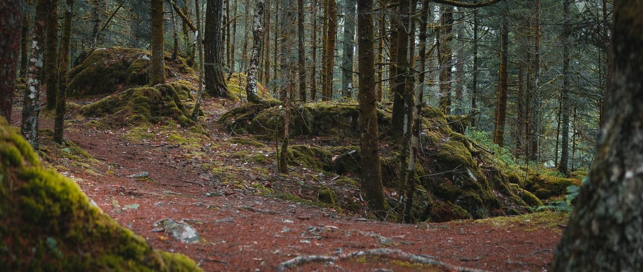 Forest in VOSGES, France