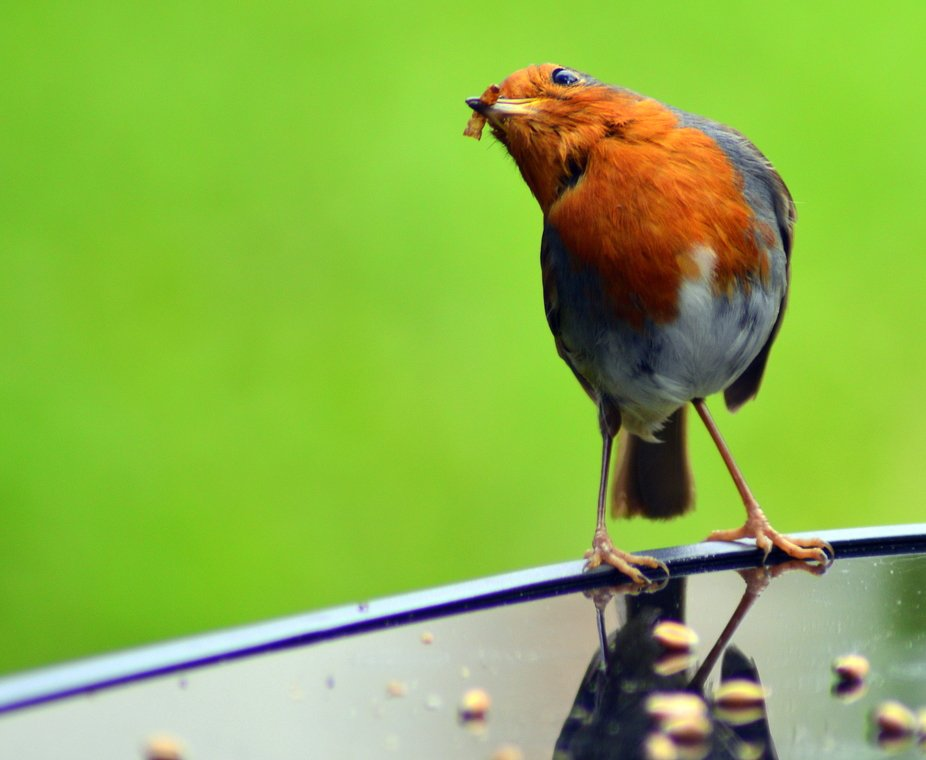 I found my camera has a manual 'Portrait' setting, and this Robin obligingly po...
