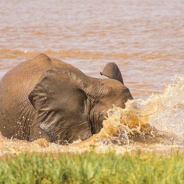 Elephants Like Water