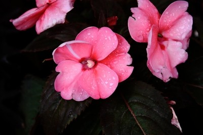Small Pink Flower 1