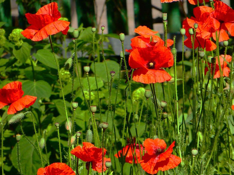 Flower garden of love