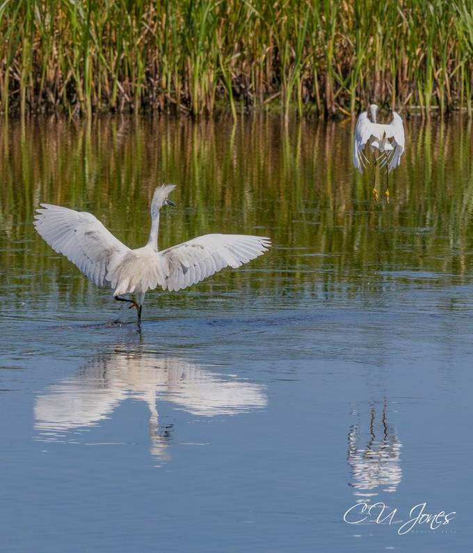 Wildlife at Donnelley WMA