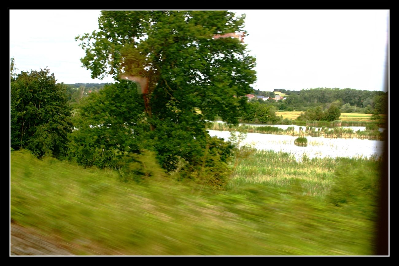 In my previous series I focused more on trees etc. In this series I will focus more on smaller details that can be found in the forest Here a view of one of the many natural swamps and ponds Picture taken from the train Sincerely Theo-Herbots-Photography https://groetenuittienen.blog/