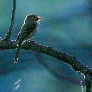 IMG_1143-2 Bird