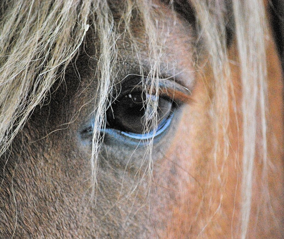 a close up of a horses eye