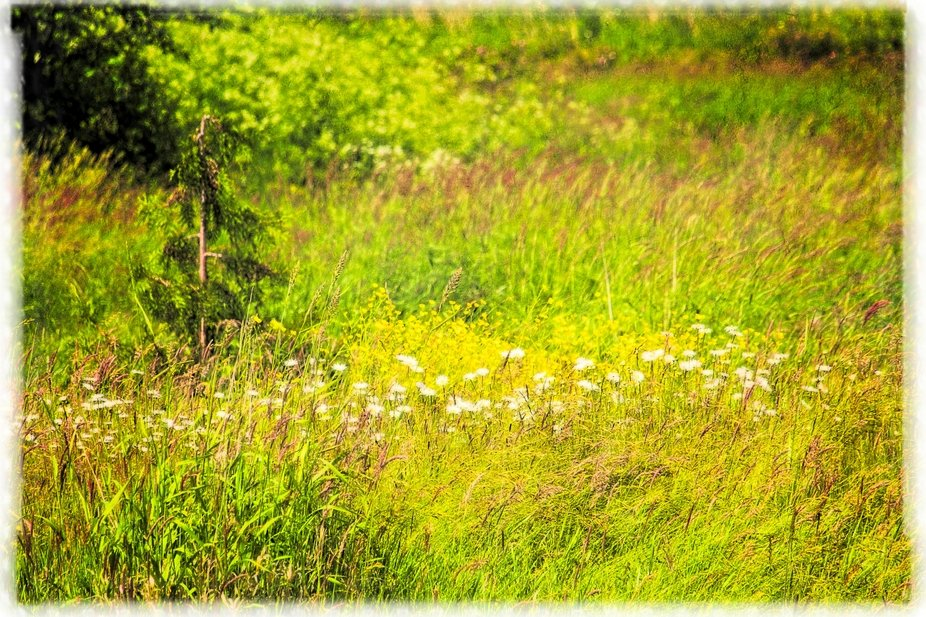 In the field around our neighborhood pond. Textured to give a painterly look.