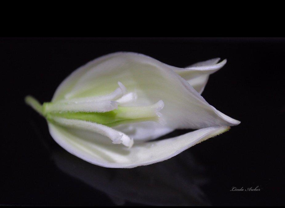 Adams Needle flower