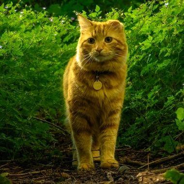 Milo in the Woods