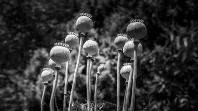 Fleurs sèches