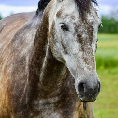 This horse was so curious about my camera. It was hard to get a shot
