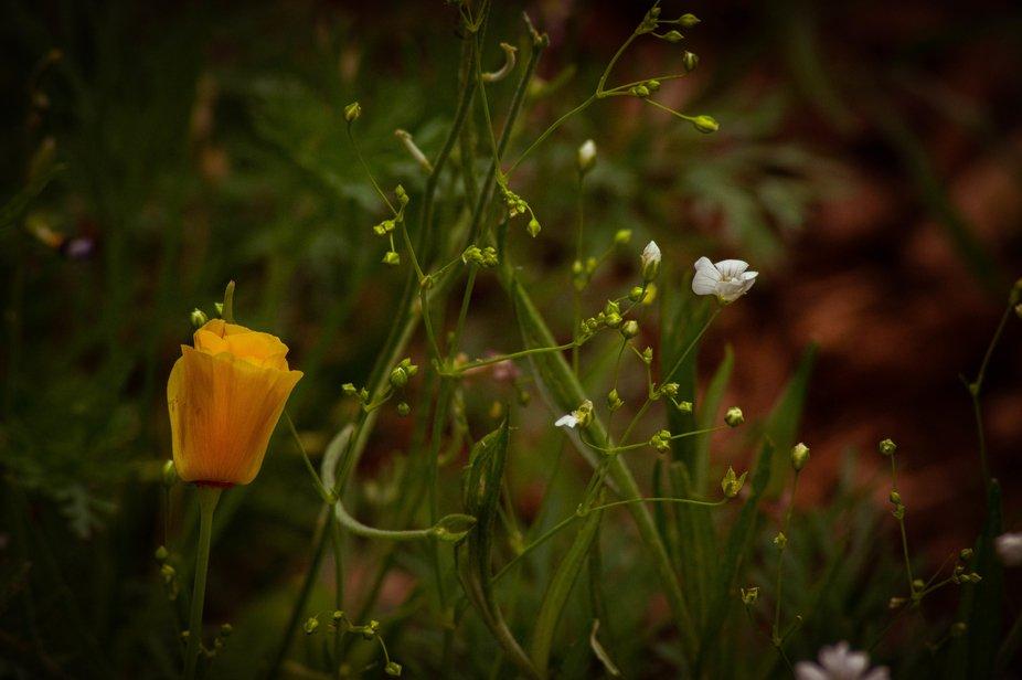 backyard wildflowers