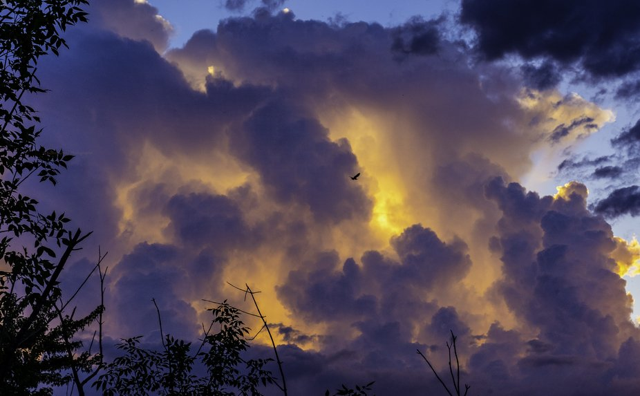 bird flying into dark clouds that are lit up by the setting sun, in places, that look like fire