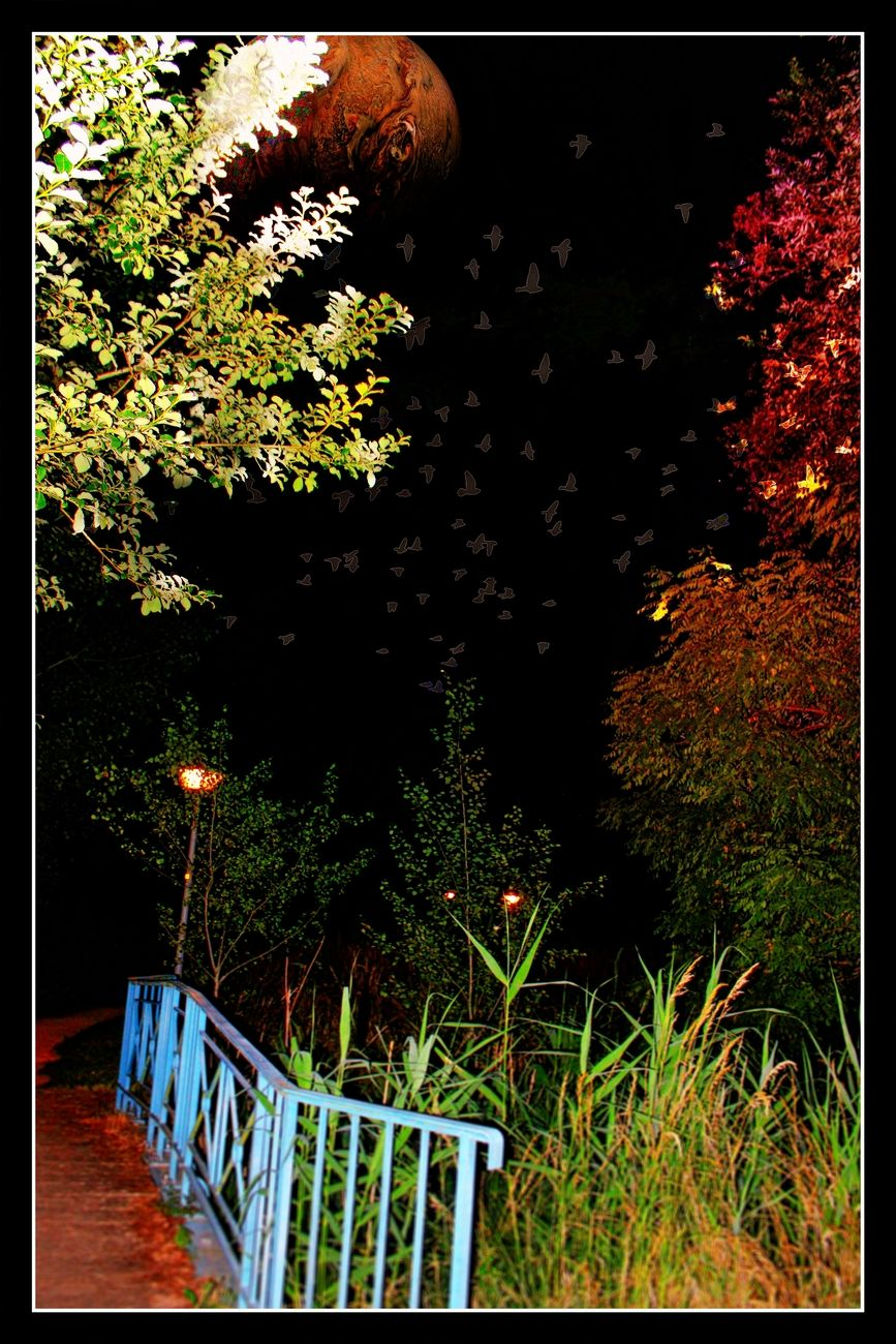 These birds in the moonlight looking for a nocturnal abode. Theo-Herbots-Photography https://groetenuittienen.blog/