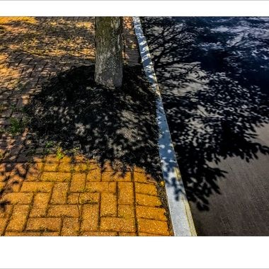 2041 Tree Shadows