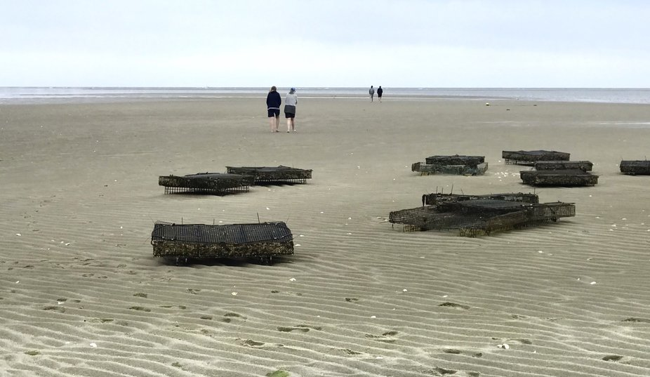 Walking Out at Low Tide