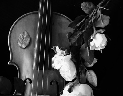 Violin and Flowers 1